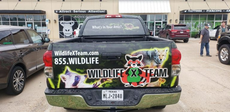 willide-centraltexas-truck-back